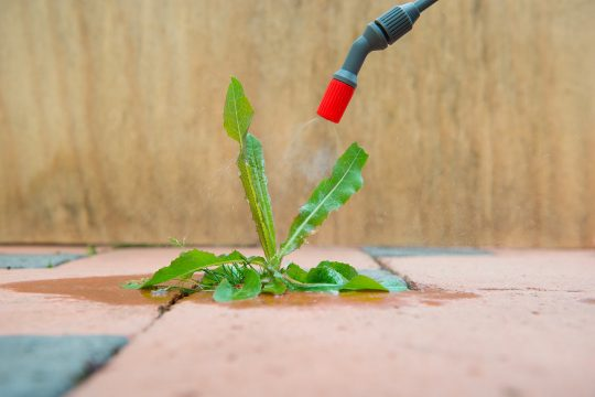 LePouceVert - Herbicide sur dalles et rocailles